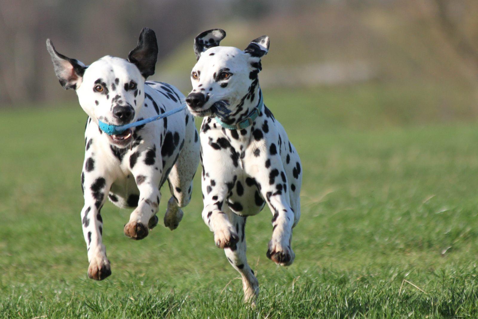 Fotos de perros rottweiler cachorros 92