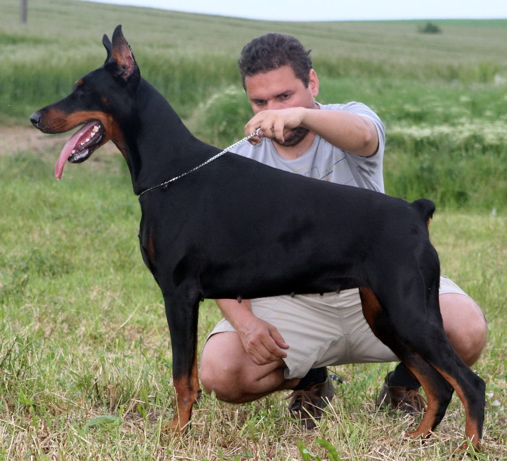 Fotos de Dobermann